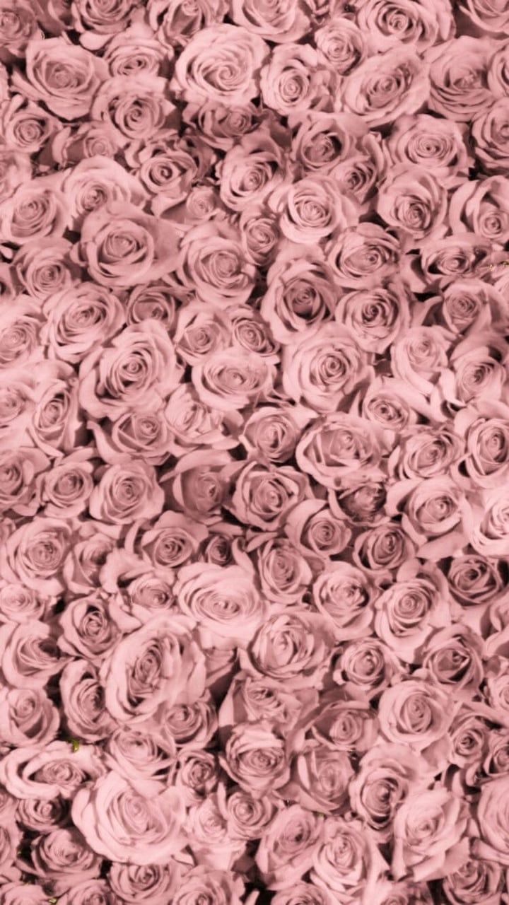 Image About Rose In Flowers By Kaylacutie000 Iphone Wallpaper Vintage Rose Wallpaper Flower Phone Wallpaper