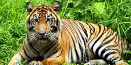 Taman Nasional Sembilang, Destinasi  Wisata Alam Sumatera Selatan