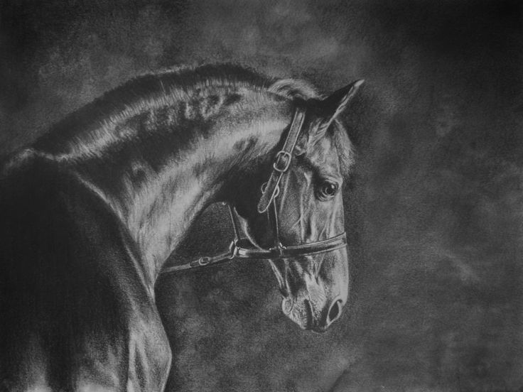 original photo by Nathalie Todd : http://truesilver.org.uk/nt2014/galleries/the-fine-art-of-horses/  Find more of my artwork here: https://www.pinterest.com/hazzoom82/my-artwork/