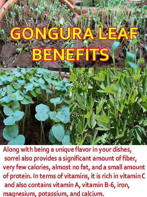 Gongura Uses Fruit Benefits Herbs Green
