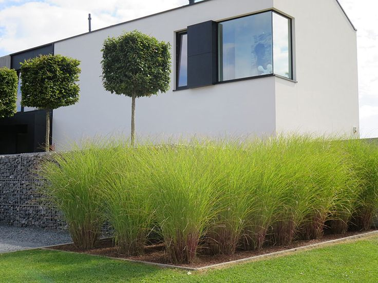 Martine pinchart architecte paysagiste architecte de jardin paysagiste à belgrade namur