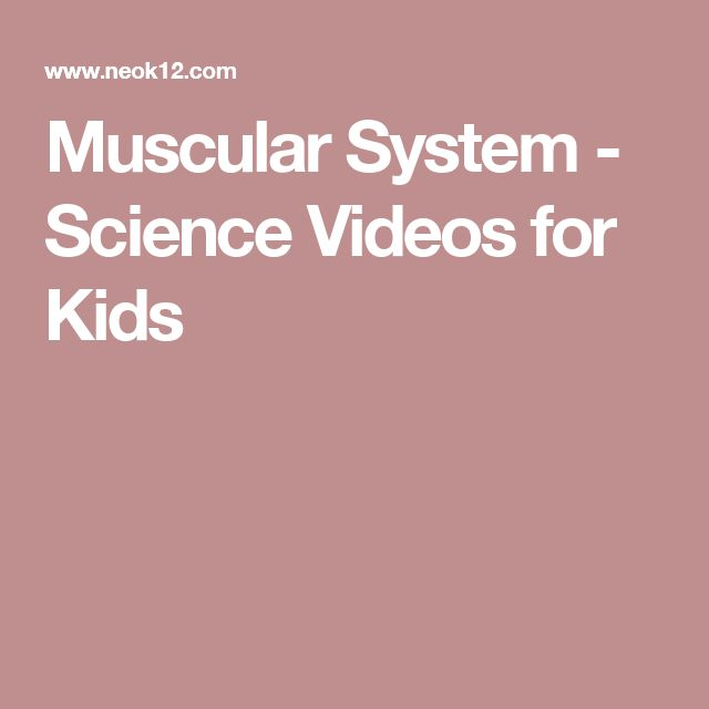 Muscular System - Science Videos for Kids