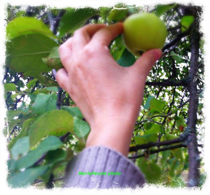 Not Eve's apple ... not an iPhone ... just an innocent & tasty apple :)