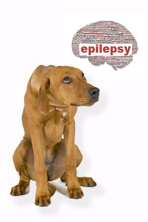 Epilepsy in Dogs - Holistic treatment and prevention (Part 1)