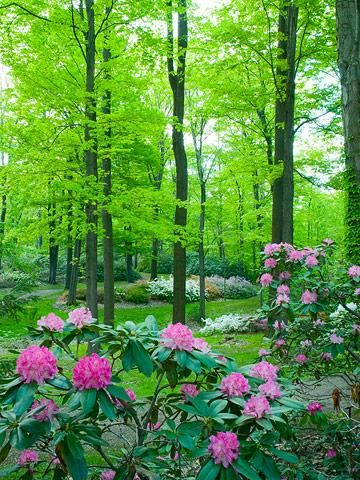 30 best images about under oak trees on pinterest for Best flowers to grow in california