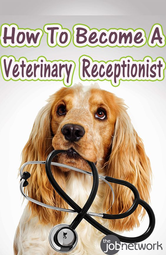 Best 25+ Receptionist jobs ideas on Pinterest Receptionist - animal hospital receptionist sample resume
