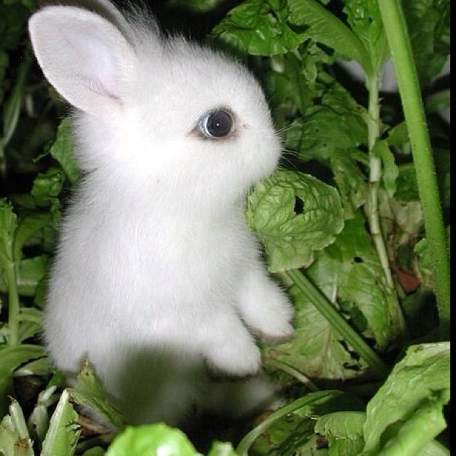 Картинки с надписями заяц