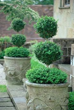 topiaries.. classic and lovely and like the stone pots to match in with the setts in the yard