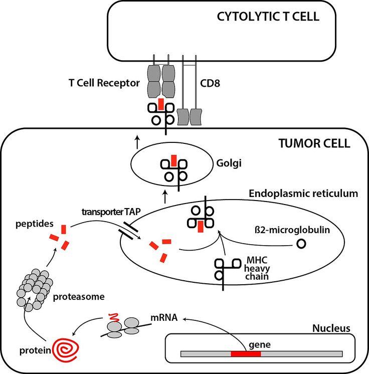 N-Glycolyl GM3 Ganglioside as a Relevant Tumor Antigen in