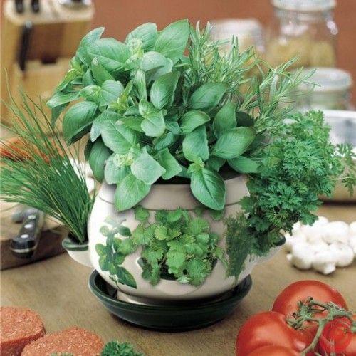 Огород на подоконнике. Как выращивать овощи в горшках