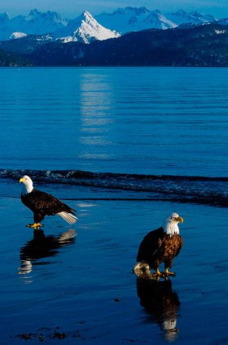 Eagle Beach - southeast Alaska