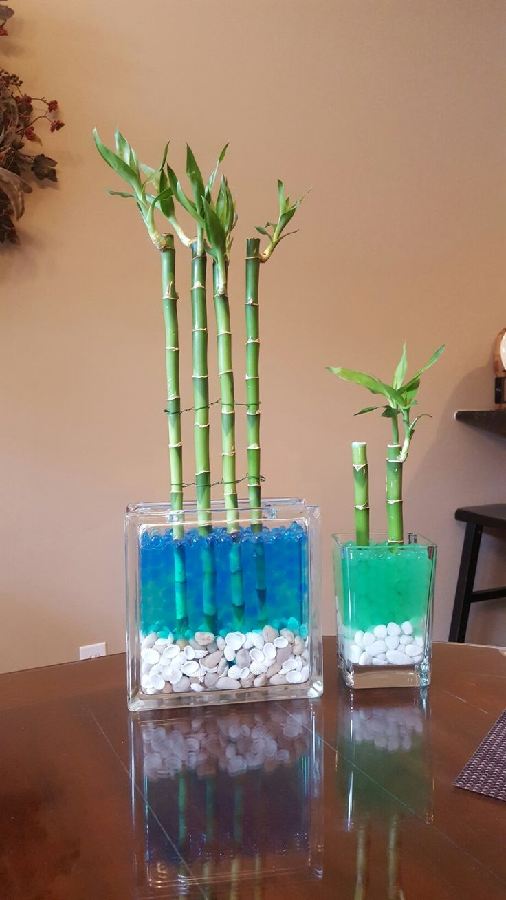 What do the colors of ribbon symbolize on lucky bamboo ehow - Lucky Bamboo 2 Glass Block 3 Water Soil Beads 4 Shells