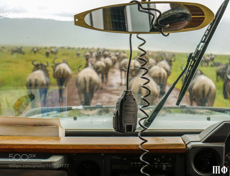 """Traffic Jam in the Serengeti Go to http://iBoatCity.com and use code PINTEREST for free shipping on your first order! (Lower 48 USA Only). Sign up for our email newsletter to get your free guide: """"Boat Buyer's Guide for Beginners."""""""