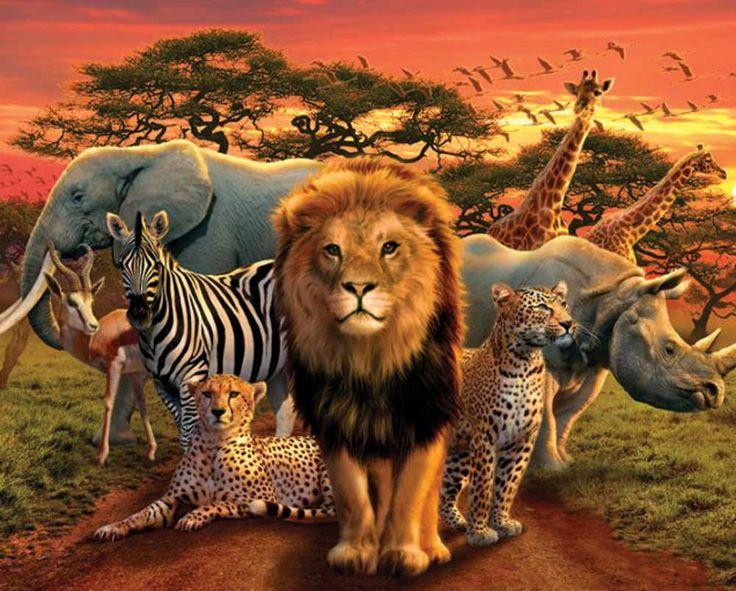 Wild Animals in Africa | african kingdom mini poster ...
