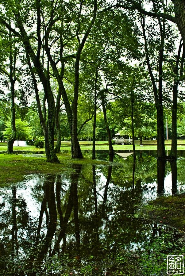 woods.gazebo.reflections: Photo