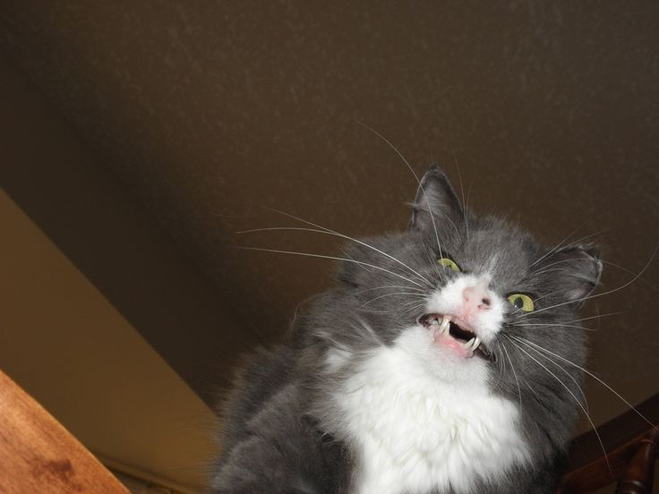 My cat sneezed at the wrong moment - Imgur