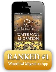 Ducks Unlimited Waterfowl Migration Map & Hunting Reports