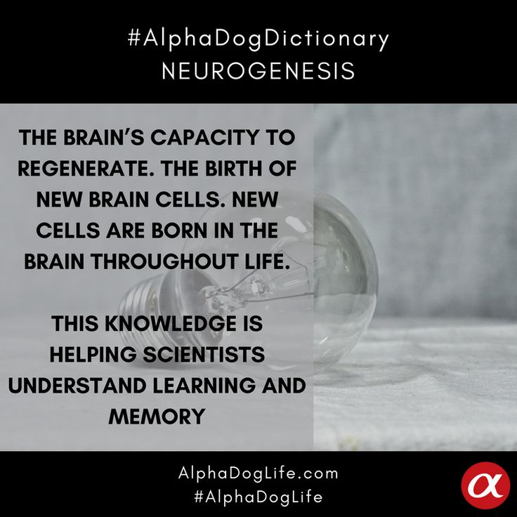 The brain's limited capacity to regenerate triggered the belief that neurogenesis — the birth of new brain cells — ceased after embryonic development. In the latter half of the 20th century, scientists found new cells are born in the brain throughout life. Today this knowledge is helping scientists understand learning and memory. #AlphaDogDictionary #AlphaDogLife #AlphaDog
