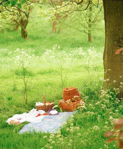 Image result for picnic dreams green grass