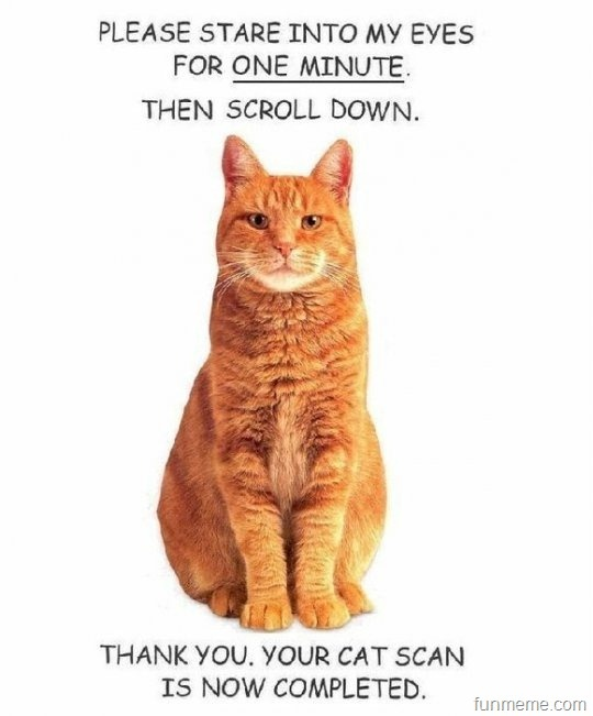 so funny!Catscan, Laugh, Cat Humor, Quote, Funny Stuff, Funny Animal, Cat Scanning, Cat Lovers, Cat Lady