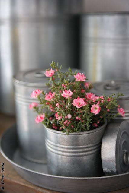 pretty pink: Pink Flower, Bit Country, Flower Details, Zinc Planters, Belinda Roussel, Tins Cans, Fall Flower, Beauty Flower,  Flowerpot