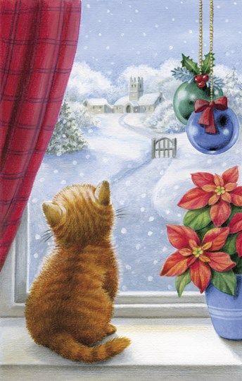 Kitten Christmas With Pointsettia