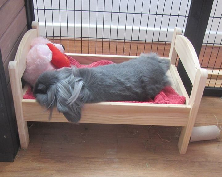 """Elke Huber's post in Companion Rabbit Chat - Leo loves his Ikea doll bed so much. (Sometimes he is sharing it for a little while with my dutchie Nala, but you can clearly tell that he considers it """"his"""".)"""