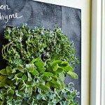"""[caption id="""""""" align=""""aligncenter"""" width=""""574""""] ハーブの菜園がおうちの壁に[/caption] ルッコラの独特の香りが好き、おうち菜園の江里です。 以前、黒板デザインで落書きもできる栽培キット「Modern Sp..."""