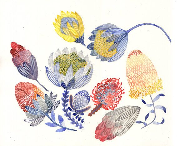 proteas by unitedthread     Paintings and Illustration on etsy.com