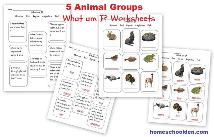 best 25 characteristics of vertebrates ideas on pinterest classifying animals vertebrates. Black Bedroom Furniture Sets. Home Design Ideas