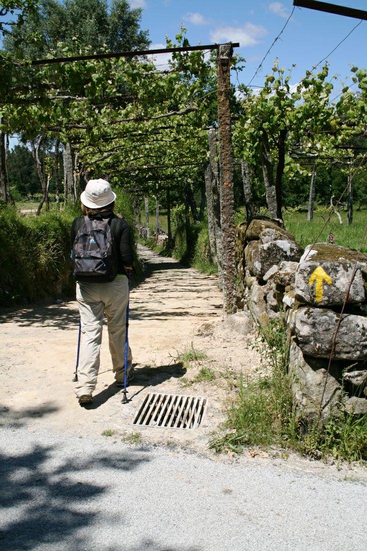 http://www.caminhoportosantiago.com/PT/programas.html