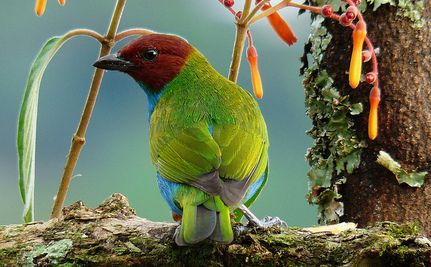 """6 Reasons You Should Be Drinking """"Bird-Friendly"""" Coffee"""