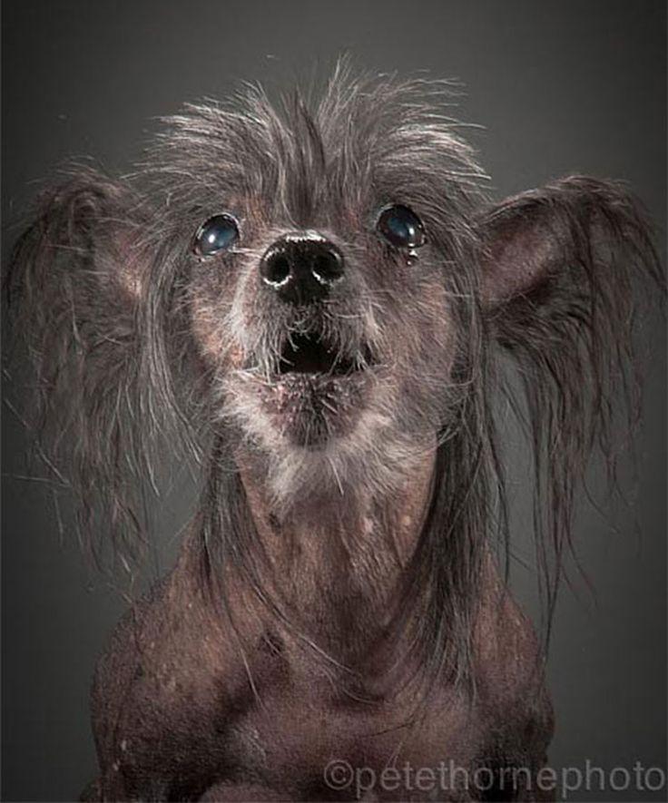 Fink, 14 años  Old Faithful: Conmovedora Serie de Retratos de Perros en Avanzada Edad | FuriaMag | Arts Magazine