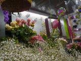 http://www.rolande-fleurs-halles-narbonne.com/article-saint-valentin-chez-votre-fleuriste-122376735.html