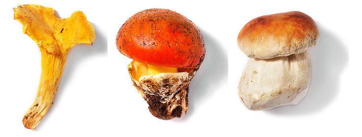Ni reino animal ni vegetal... Los hongos y setas forman un universo por sí mismas, el fungi. Con características propias, la principal diferencia con otros seres vivos está en el t