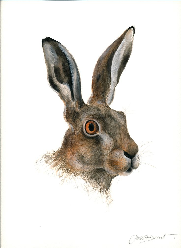 """""""Hare Portrait Study"""" by Isabelle Brent"""