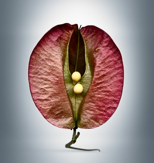 Svjetlana Tepavcevic's 'Means Of Reproduction' PHOTOS Spotlight Seed Pods Like Never Before