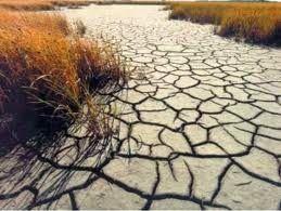 Hoy   es  Noticia: Ayudas para afrontar sequía en Riohacha :: Rosita ...