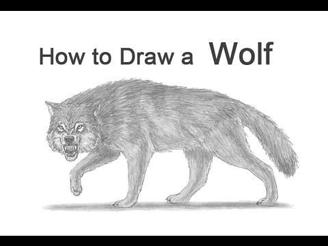 17 Best ideas about Wolf Growling on Pinterest | Angry ... | 480 x 360 jpeg 20kB