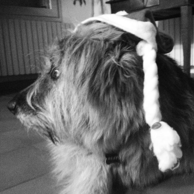 Il cane più bello del mondo sorry del mio mondo