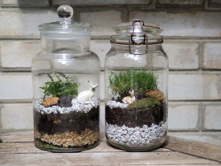 Si on apprenait comment fabriquer son terrarium. La particularité de ces terrariums c'est qu'ils sont fermés et qu'il ne faut les arroser que deux fois pas an.
