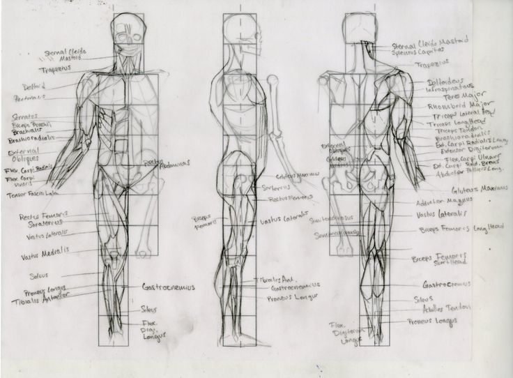 33 best Proportions images on Pinterest | Drawing reference, To draw ...