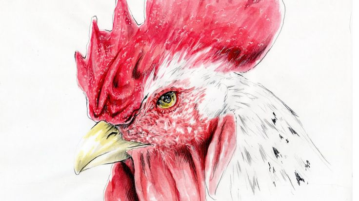 a speed drawing where i show how to draw a rooster,made by watercolor,white gel pen (pilot) and pencil...i hope you like it :-) un disegno in time lapse in cui mostro come disegnare un gallo,fatto com acquarelli e penna pianca gel della pilot...spero vi piaccia :-) enjoy my YOUtube channel here ---> https://www.youtube.com/user/NFJdrawings