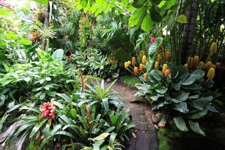 As 25 melhores ideias de jardins bonitos no pinterest for Jardin tropical plantas