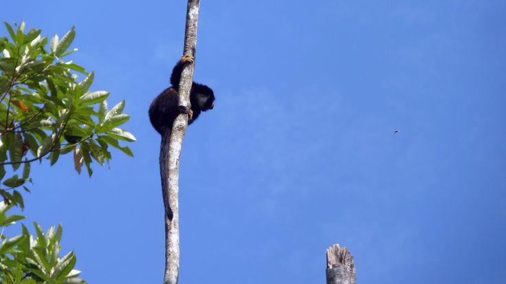 Mono a punto de saltar by Elbisnet - Elbis Bonilla  on 500px