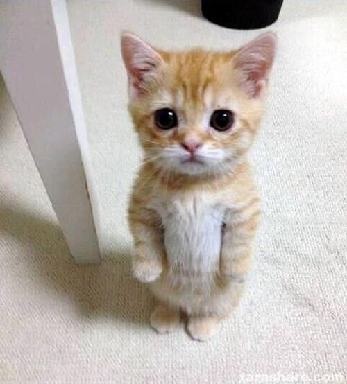 This little one who just wants a hug. | 27 Kittens ...the soft belly....-dies of cuteness-