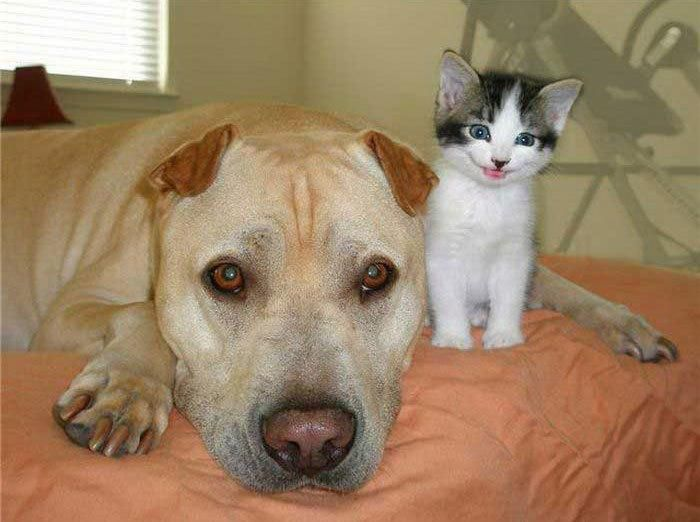 Sleeping puppy and smiling kitten - follow the pic for ...