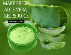 Aloe vera is amazing plant which is also known as the plant of immortality. Aloe vera has been used for...