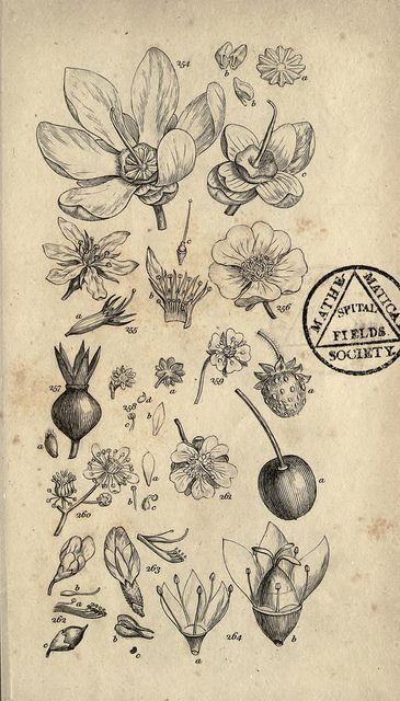 Botanical n308_w1150, via Flickr.