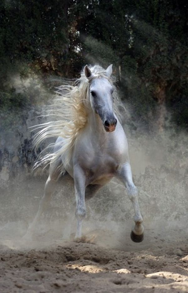 Beautiful horse photography (33 photos) - Xaxor